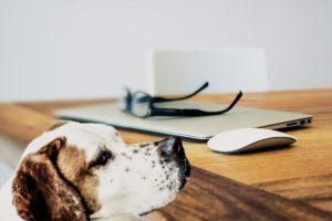 is een hondenverzekering geschikt voor mijn hond?