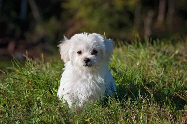 female puppy names